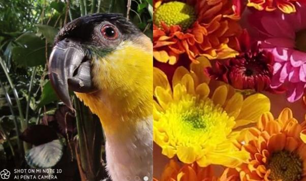 Сравнение макроснимков на телефоны Сяоми Ми Ноут 10 и Ми 9